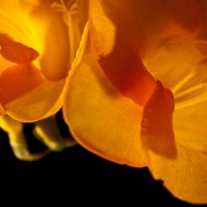 Fotografia de la portada del portfolio de natura